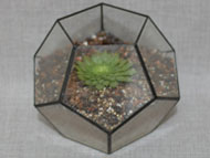 Dodecahedron Terrariums