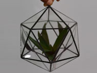 YNGT-13 Geometric Terrariums