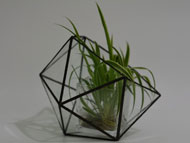 YNGT-14 Geometric Terrariums