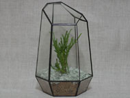 YNGT-03 Geometric Terrariums