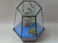YNGT-33 Geometric Terrariums