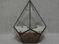 YNGT-04 Geometric Terrariums